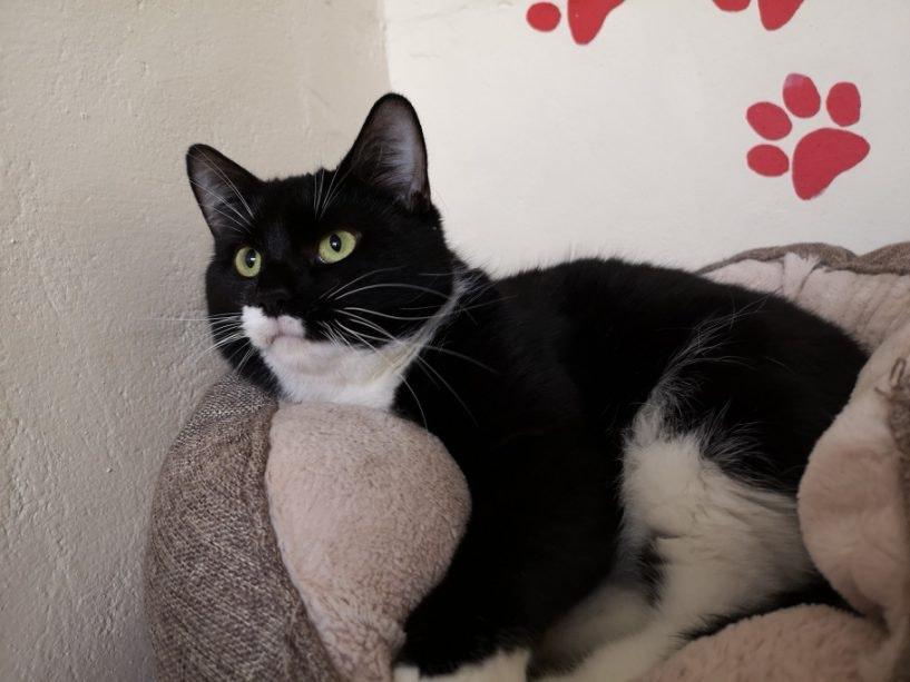 Lola (Black and White)